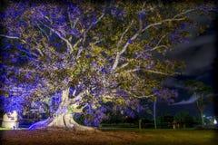 Belichteter Baum außerhalb Emerald Lakess lizenzfreie stockfotos