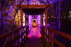 Belichteter hölzerner Steg und Wald nachts Stockfotografie