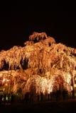 Belichteter Kirschbaum in Fukushima, Japan Stockbild