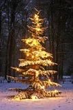 Belichteter schneebedeckter Weihnachtsbaum Lizenzfreie Stockfotos