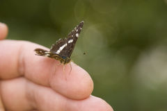 Belief. Small butterfly on my hand Royalty Free Stock Photos