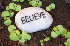 Believe in New Growth. Sprouting plants surround a believe message rock Stock Image