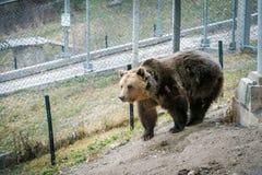 Belitsa Dancing bears park Bulgaria, Bansko Stock Photography