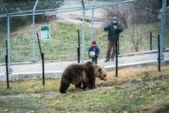 Belitsa tana niedźwiedzie parkowy Bułgaria, Bansko obrazy stock