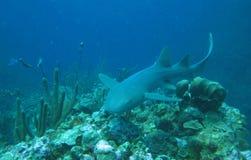 Belize4 Immagini Stock