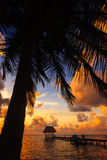 Belize Caye Caulker, Coconut Sunset Royalty Free Stock Photo