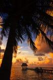 Belize Caye Caulker, kokosnötsolnedgång Royaltyfri Foto