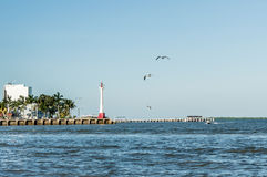 Belize City Harbor. With a lighthouse and seagulls Stock Image