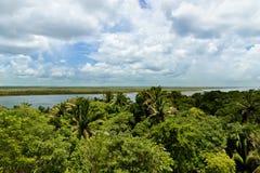 Belize djungel Arkivbilder