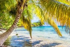 Belize ett tropiskt paradis i Central America arkivbilder