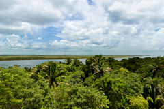 Belize Jungle. View of Belize jungle and the New River seen in the distance Stock Images