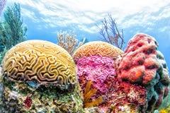 belize korallrev Arkivbild