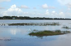Belize, santuário de Birding do mundo Imagens de Stock Royalty Free