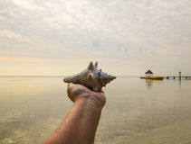 Belize-Tritonshorn an Hand Lizenzfreie Stockfotografie
