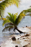 Belize, tropical  beach Royalty Free Stock Images