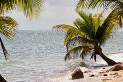 Belize, tropical  beach Stock Photos