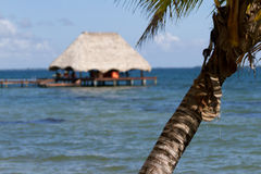 Belize, tropical  beach Stock Photography