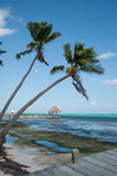 Belizian shore Stock Image