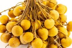Belkowatego gałęziastego owocowego longan brązu wyśmienicie cukierki wiele mini zbliżenie odizolowywał tło zdjęcia royalty free