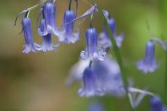 Bell azul Fotografia de Stock Royalty Free