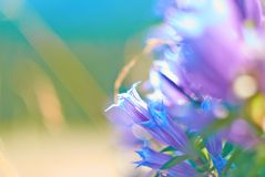 Bell-Blumen lizenzfreies stockfoto