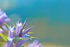 Bell-Blumen stockbilder