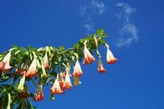 Bell-Blumen lizenzfreies stockbild