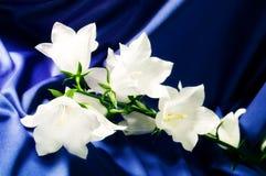 Bell-Blumen auf einer blauen Seide Stockbild