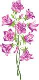 Bell flower. Bunch of purple bell flower Stock Photos
