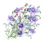 Bell flower  bouquet. Bell flower  pattern handmade background bouquet watercolor Royalty Free Stock Image