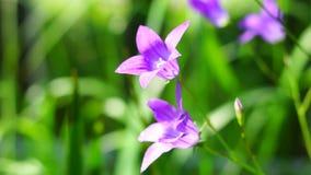 Bell flower close stock video