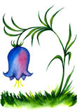 Bell flower painting. Watercolor paining on single blue bell flower with white background Stock Photos
