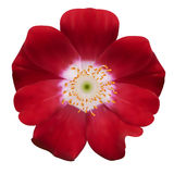 Bell flower. Vector illustration. Isolated on white Royalty Free Stock Photography