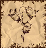 Bell flower  on vintage background. Sketch illustration Royalty Free Stock Photo