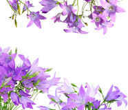 Bell flowers border Stock Photography
