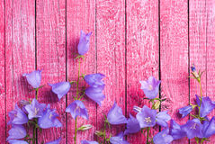 Bell flowers composition Royalty Free Stock Images