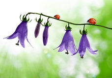 Bell flowers with ladybug Royalty Free Stock Photography