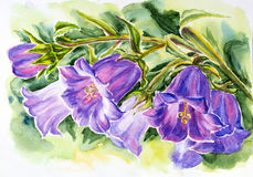 Bell flowers. Watercolor painting of the bell flowers Stock Image