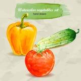 Bell-Gemüsepaprika, -gurke und -tomate Gezeichneter Gemüsesatz des Vektoraquarells Hand Lizenzfreie Stockfotografie
