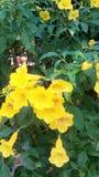 Bell jaune Photo libre de droits