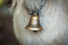 Bell-neck of a goat royalty free stock images