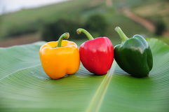 Bell pepper on banana leaf. Three different colored peppers on a leaf banana Stock Image
