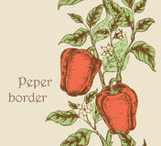 Bell pepper borders Stock Photos