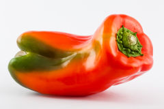 Bell pepper Capsicum annuum. In white background royalty free stock photography