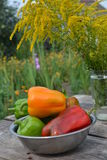 Bell pepper. Is a cultivar group of the species Capsicum annuum stock images