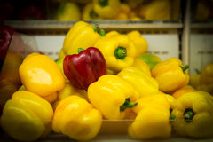 Bell pepper on a farm stand Stock Images