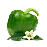 Bell Pepper with Leaves and Flower Isolated on White Background Royalty Free Stock Photo