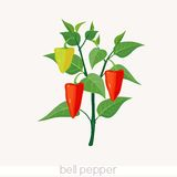 Bell pepper. Red bell pepper on plant Stock Images