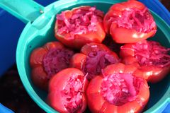 Bell pepper stuffed with pickled red cabbage Stock Image