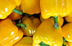 Bell Pepper, Yellow Color, mild spiciness. Slightly sweet flavor. The colors vary from Green to Purple based on the amount of time they are left on the vine royalty free stock photos